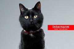 internorm_katze_l